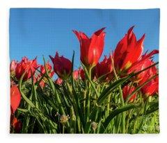 The Red Grails Of Nature Fleece Blanket
