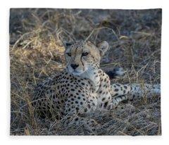 Cheetah In Repose Fleece Blanket