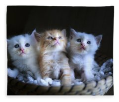 Three Little Kitties Fleece Blanket