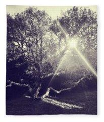 Tree At Sunset Fleece Blanket