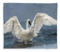 Trumpeter Swan Splash Fleece Blanket