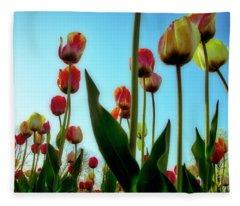 Tulip Holland Michigan 85 Fleece Blanket