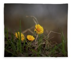 Tussilago Farfara,  Coltsfoot #i7 Fleece Blanket