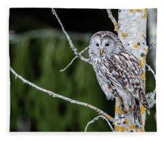 Ural Owl Perching On An Aspen Twig Fleece Blanket