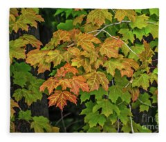 Various Stages Of Fall Color On Maple Leaves Fleece Blanket