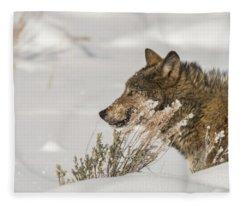 W39 Fleece Blanket