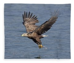 White-tailed Eagle Carries Fish Fleece Blanket