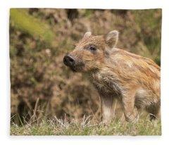 Wild Boar Humbug Fleece Blanket