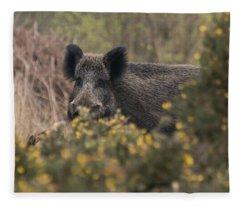 Wild Boar Sow Fleece Blanket