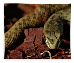 Wild Snake Malpolon Monspessulanus In A Tree Trunk Fleece Blanket