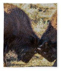 Young Bison Fleece Blanket