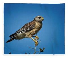 Young Cooper's Hawk Fleece Blanket