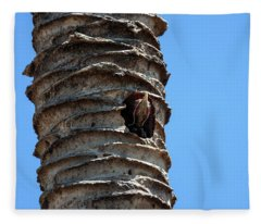 Young Lineated Woodpecker Dryocopus Lineatus Looks Out Of The Breeding Cave In The Trunk Of A Palm Fleece Blanket