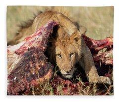 Young Lion On Cape Buffalo Kill Fleece Blanket