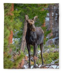 Young Moose In The Morning Forest Fleece Blanket