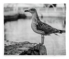 Young Seagull Fleece Blanket