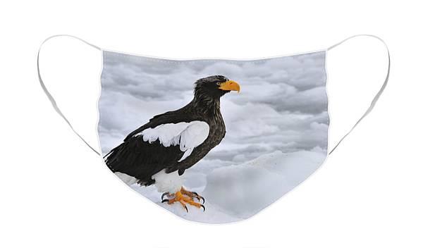 Sea-headed Eagle Theatre Mask