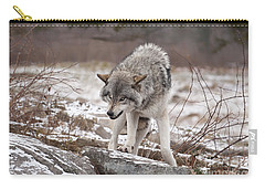 Carry-all Pouch featuring the photograph Adult Timber Wolf by Wolves Only