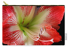 Amaryllis Carry-all Pouch by Ron Davidson