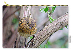 Baby Robin Carry-all Pouch by Tony Murtagh
