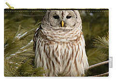 Barred Owl In A Pine Tree. Carry-all Pouch by Michel Soucy