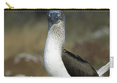 Blue-footed Booby Courtship Dance Carry-all Pouch by Tui De Roy