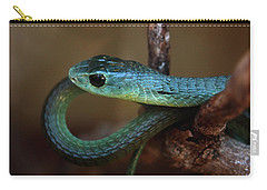 Boomslang Carry-all Pouch by Aidan Moran