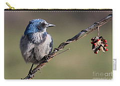 Florida Scrub Jay Carry-all Pouch by Meg Rousher