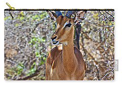 Male Impala In Kruger National Park-south Africa   Carry-all Pouch