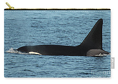 Carry-all Pouch featuring the photograph Male Orca Killer Whale In Monterey Bay California 2013 by California Views Mr Pat Hathaway Archives