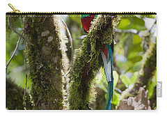 Resplendent Quetzal Male Costa Rica Carry-all Pouch