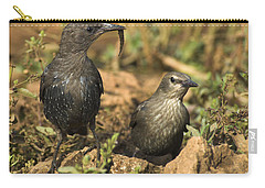Starling Estornino Carry-all Pouch by Guido Montanes Castillo