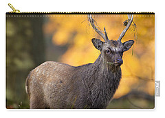 110307p073 Carry-all Pouch by Arterra Picture Library