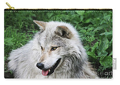 Gray Wolf Carry-all Pouch by Alyce Taylor