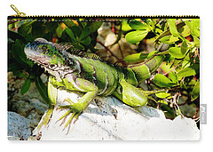Carry-all Pouch featuring the photograph Green Iguana by Amar Sheow