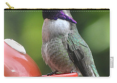 Carry-all Pouch featuring the photograph Male Costa On Perch by Jay Milo
