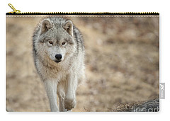Carry-all Pouch featuring the photograph Arctic Wolf by Wolves Only