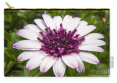 3d Berry White Cape Daisy - Osteospermum  Carry-all Pouch