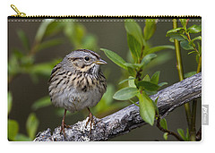 Lincolns Sparrow Carry-all Pouch