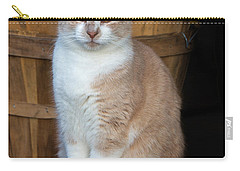 Carry-all Pouch featuring the photograph A Cats Stare by Gary Slawsky