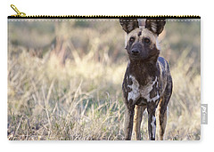 African Wild Dog  Lycaon Pictus Carry-all Pouch by Liz Leyden