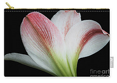 Amaryllis Carry-all Pouch by Judy Whitton