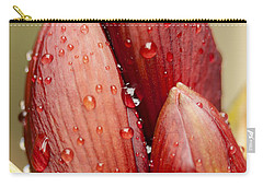 Amaryllis Carry-all Pouch by Meg Rousher