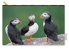 Atlantic Puffin Trio Carry-all Pouch by Yva Momatiuk John Eastcott