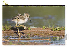 Baby Black-necked Stilt Exploring Carry-all Pouch by Bryan Keil