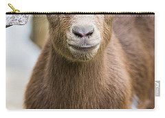 Baby Goat Carry-all Pouch by Shelby  Young