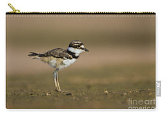 Baby Killdeer Carry-all Pouch by Bryan Keil