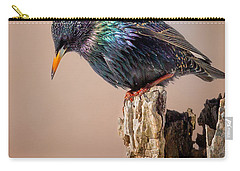 Backyard Birds European Starling Carry-all Pouch by Bill Wakeley