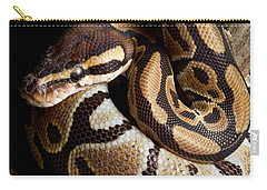 Carry-all Pouch featuring the photograph Ball Python Python Regius by David Kenny