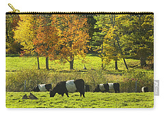 Belted Galloway Cows Grazing On Grass In Rockport Farm Fall Maine Photograph Carry-all Pouch
